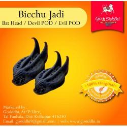 Bicchu Buti |Bat Head | Devil POD | Evil POD| बिच्छू बूटी | to Reduce Ill Effects of Saturn